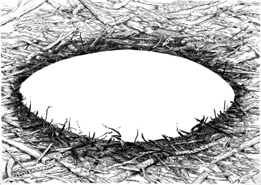 Pábilo (2016) - Tinta china y acrílico sobre papel - 86 x 120 cm